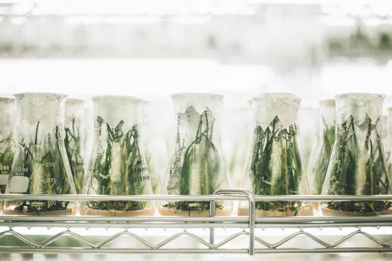 Test tubes with plant specimens