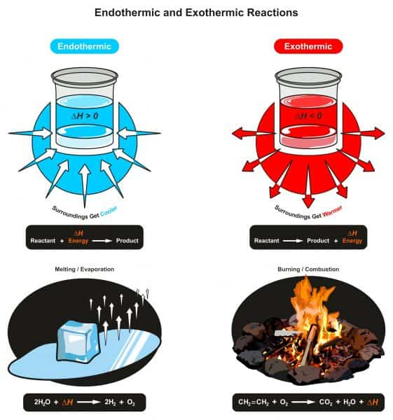 Endothermic and Exothermic Reactions infographic diagram showing relation between reactant energy and product